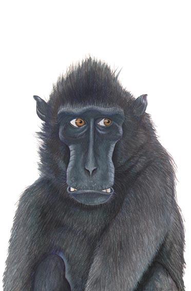 Monkey study