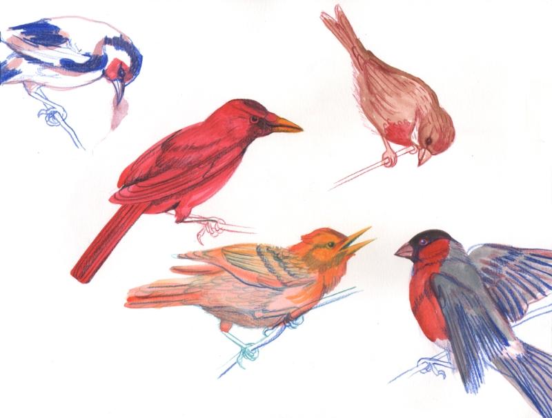 Bird sketches sm
