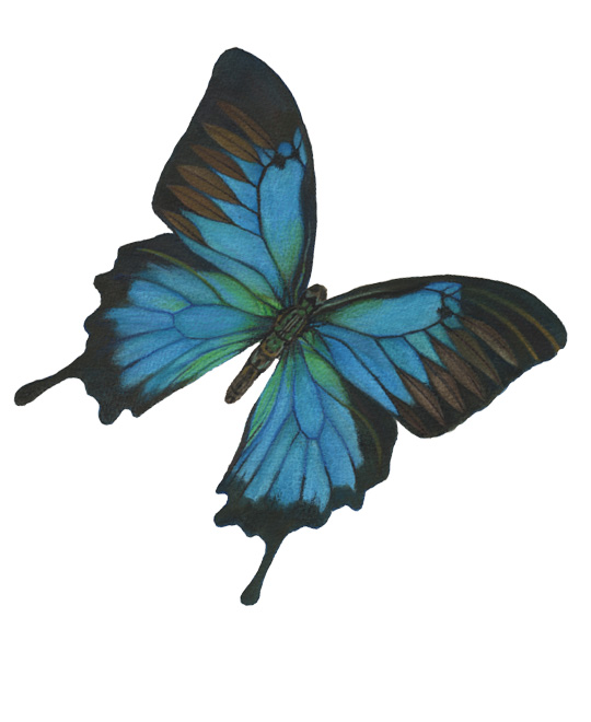 butterfly painted 660px