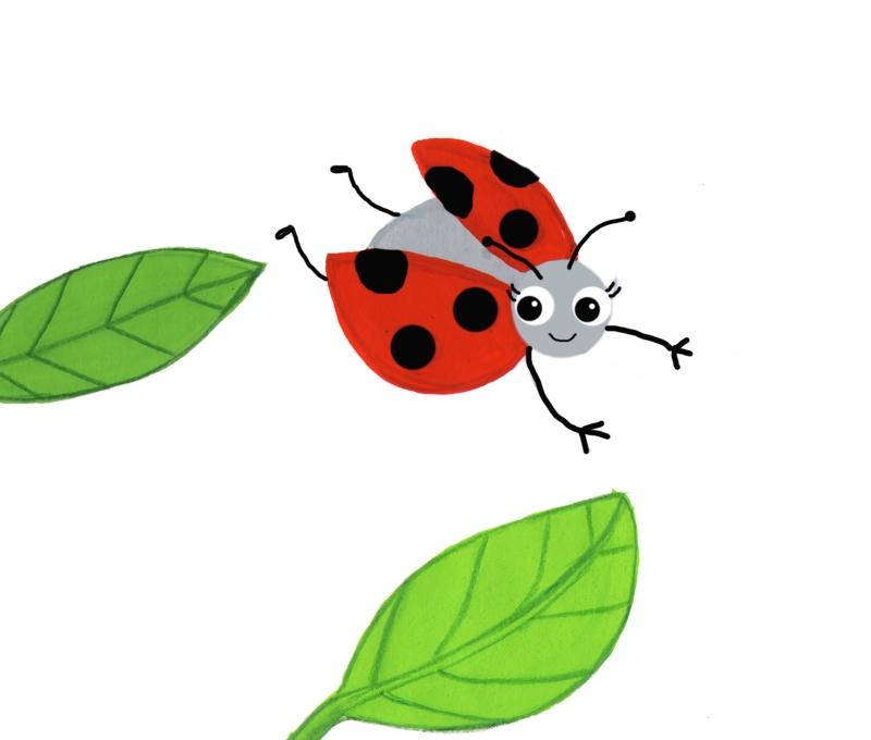 ladybird flying
